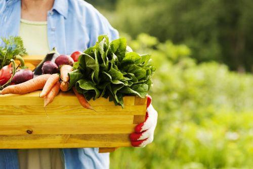 Kviečiu į gamtinės žemdirbystės seminarus, liepos mėnesio savaitgaliais