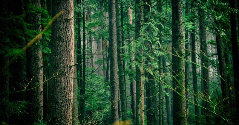 Išsaugokime Lietuvos miškus